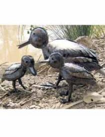 Ducks & Ducklings