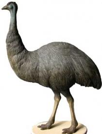 Emu 2 # 7108