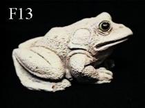 Frog Baby Sitting