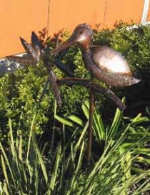 Kookaburra Single