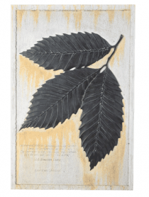 American Chestnut Wall Plaque