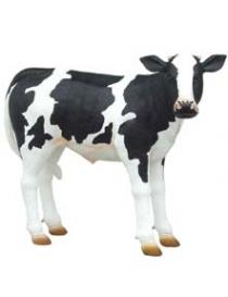 Calf Newborn