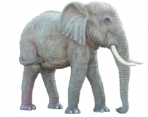 Asian Elephant (Life Size)