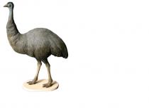 Large Emu