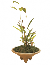 Thalia Planter Medium