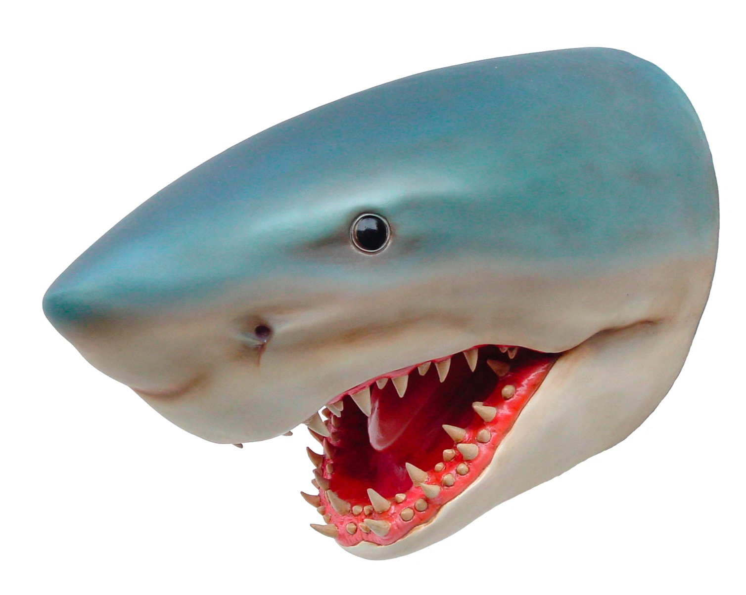 Shark Head Fibreglass #7114
